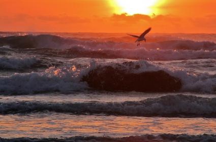 bird_vs_wave_553208