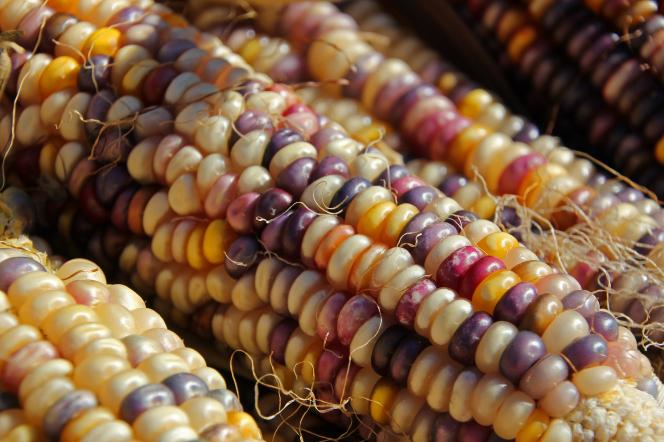 corn-farmers-market-1279078-gallery