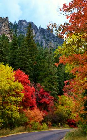 trees-autumn-1047519-gallery